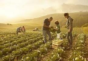 agricoltura economia